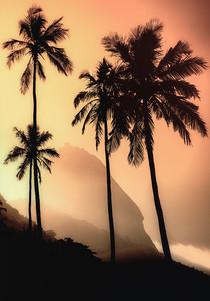 Rio Paisagem2 (31).jpg