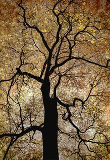 Ipê Amarelo_Flora Brasilis (13).jpg