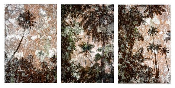 Triptico palmeiras_Flora Brasilis.jpg