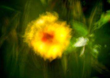Flor impressionista_Flora Brasilis (9).jpg