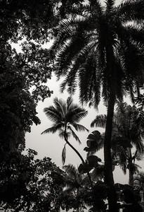 Palmeira Art Noir_Flora Brasilis (1).jpg