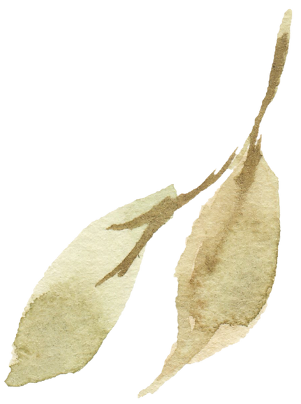 leaf 17_edited.png