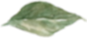 leaf 5_edited.png
