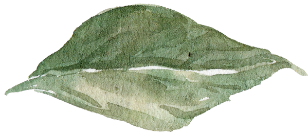leaf 5_edited.png