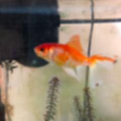 OSG Fish.jpg