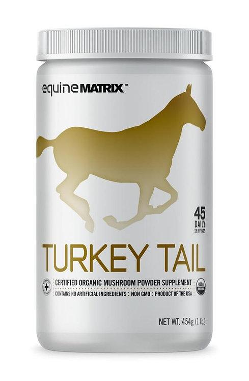 Trametes veriscolor (Turkey Tail)