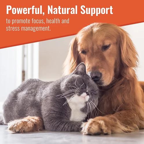 Zen Matrix Calming Supplement