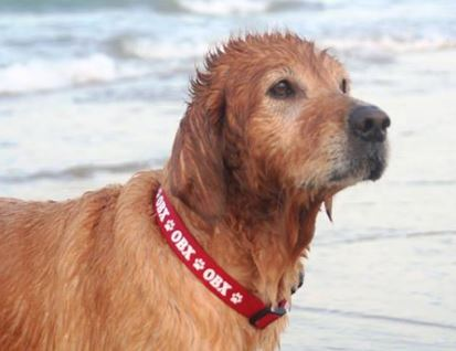 original obx dog collars