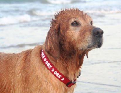 original obx dog collars