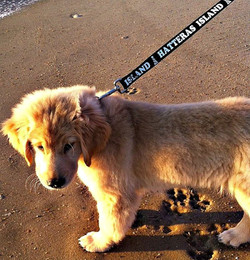hatteras island leash for Vacation