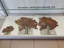 Nieuwe bomen in de vitrine van het gemeentehuis