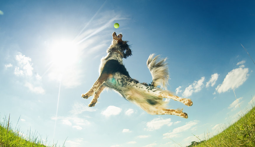 Dog%20catching%20a%20ball%20in%20mid-air
