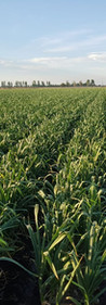 exportar soja al mundo, china asia, europa y estados unidos