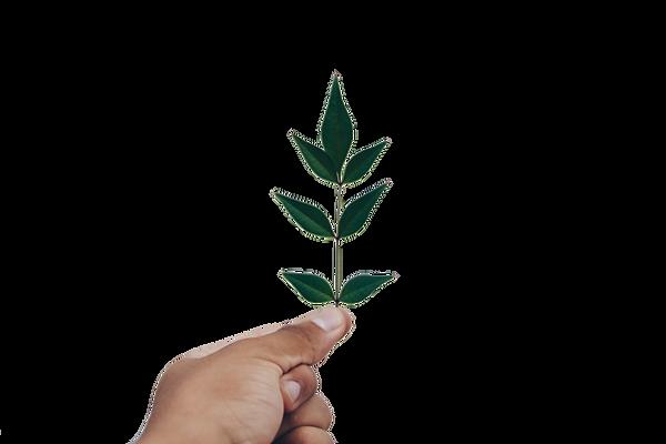 Criamos mudas de arvores do brasil para reflorestamento da mata atlantica sem fins de lucro porque somos uma ong, a ong ambientalista do brasil, intervenimos ja 23 estados do pais