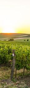 viñas para la venta en el extranjero de vino a granel, envasado o de uvas.