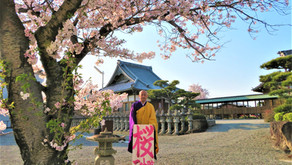 桜が満開に咲きました