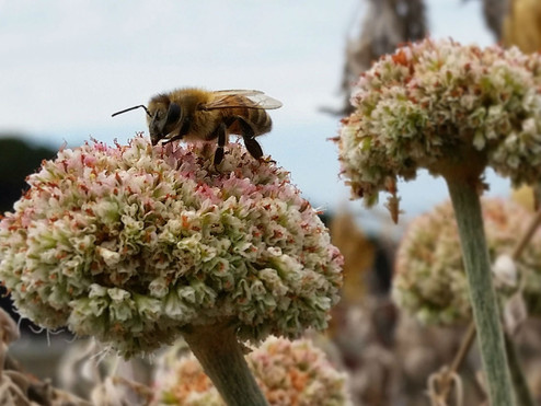 The Bee Blog