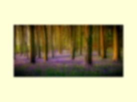 ZZZ 1 Roger_Bluebell Wood.jpg