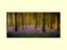 Roger_Bluebell Wood.jpg