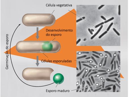 Esporo microbiano