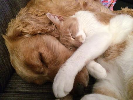 STEC em cães e gatos