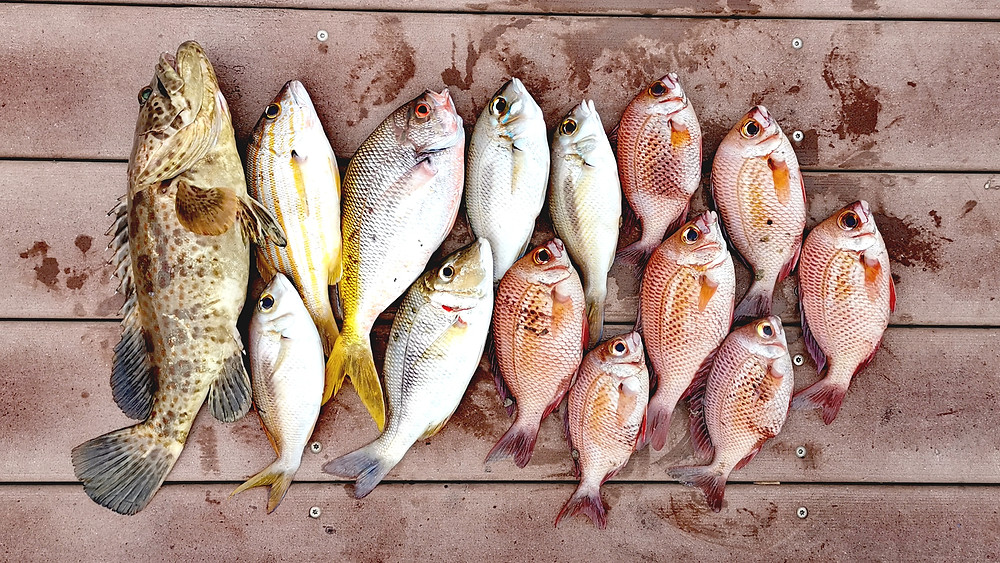 Types of fish in Singapore