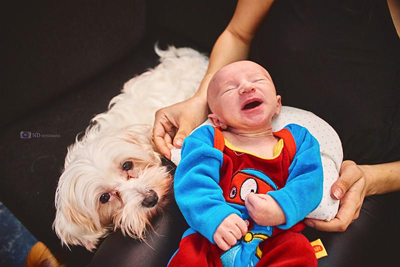 Book-newborn-a-domicilio-pet-friendly
