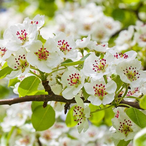 Flower - 15x15cm