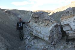 The Stone Tree Petrified Log