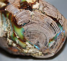 Wood Opal combo, ie, Opal in Petrified Wood