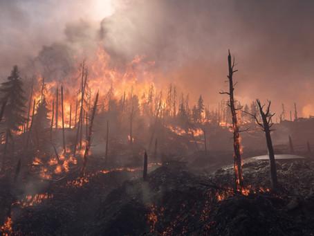 Wenn der Wald brennt - Erhöhte Waldbrandgefahr