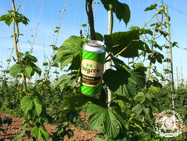 Hangin' in the hop fields with a can of Enegren Maibock German Style Spring Lager