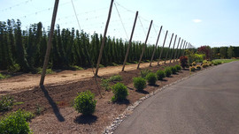 Willamette Valley Hops South Parking