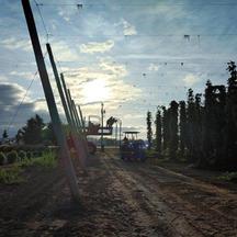Harvest Morning.jpg