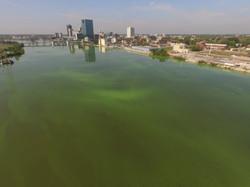 Maumee River Algae