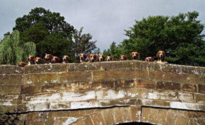 hounds on bridge.jpg