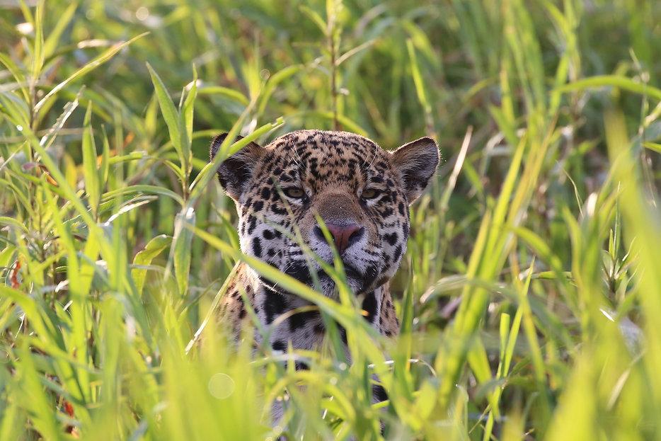 Gasparetour Pantanal Photo (3).JPG