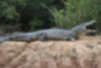 Pantanal Eco Tourism