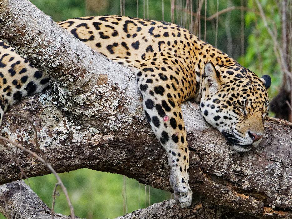 Gasparetour Pantanal photo (4).jpg