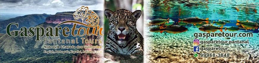 Gaparetour Pantanal Brazil