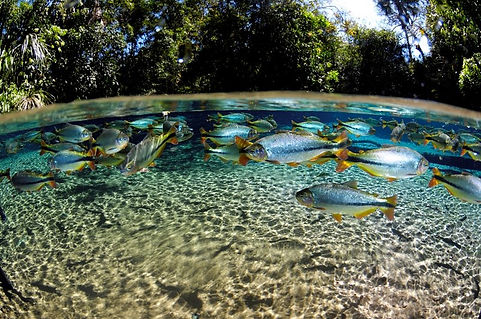 Nobres Blue Lagoon Eco Tour Operator Guide Igor Gaspareto