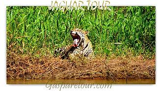Pantanal Tours