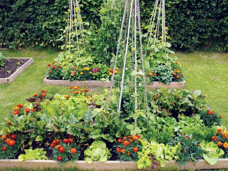 How to Start a Garden to Save Money on Food