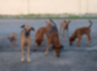 Dogs at the Kluivert Dog Rescue Center Curacao