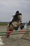 FMEC show jumping - horse