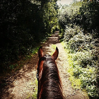 Hacking out the back gate of FMEC - straight onto a horse trail