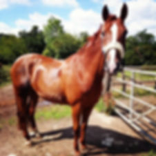 FMEC - gate to the fields - horse livery yard