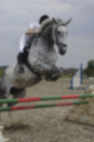 FMEC show jumping - Frith Manor Equestrian Centre - North London