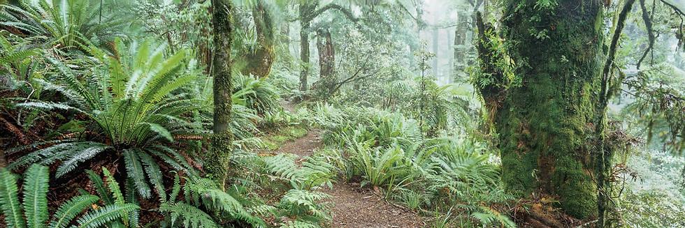 Regenwald #3