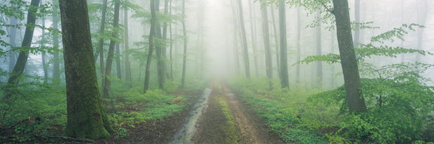 PATHS OF THE FOREST #1
